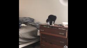 Wyluzuj kotku
