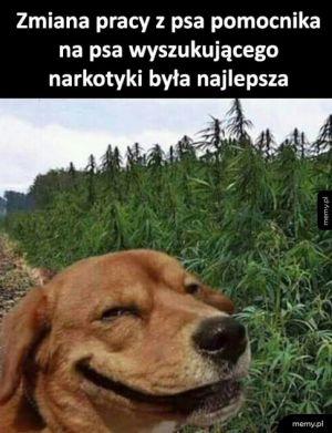 Zmiana pracy psa