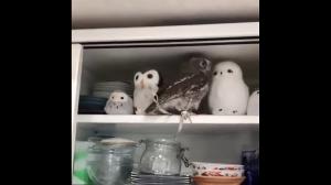 Sowa znalazła przyjaciół
