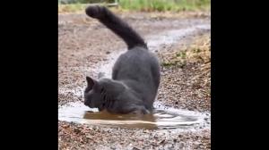 Koty  nie lubią wo....