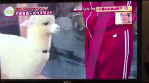 Japońskie programy telewizyjne są szalone
