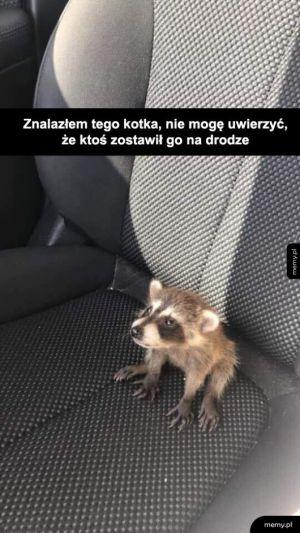 Biedny kotek