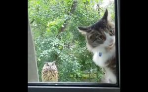 Koteł jest w szoku