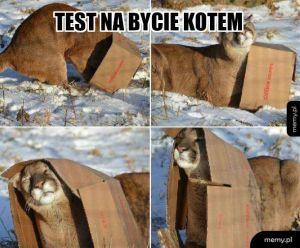 Koty zrozumieją