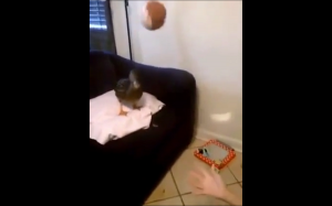 Zabawa z kaczką
