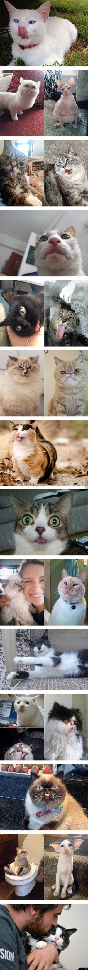 Nie wszystkie koty są fotogeniczne