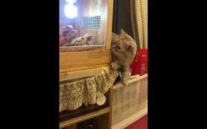 Kot vs małe smoki