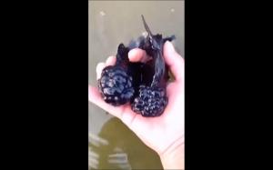 Dziwne ryby