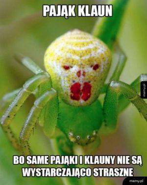 Przerażający pająk