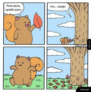 Uprzejmy wiewiór