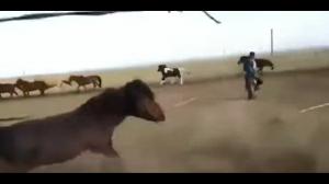 Driftujący koń