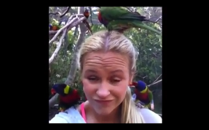 To miły ptaszek mówili