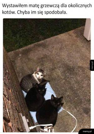 Kotki lubią ciepełko
