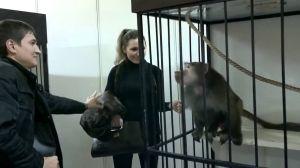 Zazdrosna małp