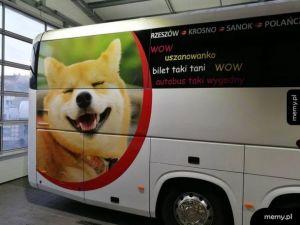 Taki szybki autobus