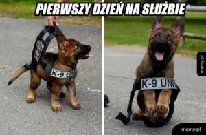 K9 najsłodszy policjant