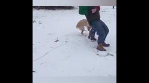 Psy i śmieg