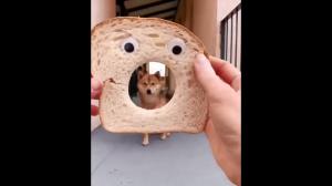 Chlebeł