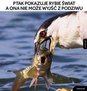 Ah te ryby