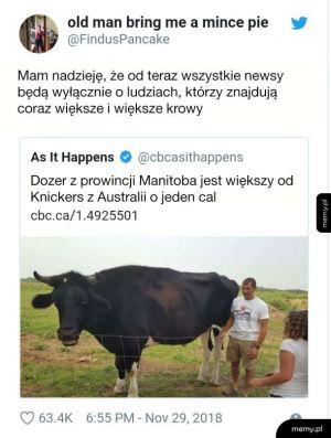 Jeszcze większa krowa