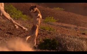 Spadaj! Jestem żyrafą!