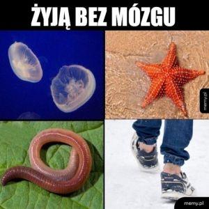 Mózgiii