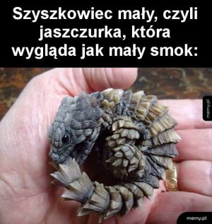Miniaturowy smok