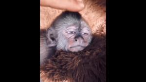 Zadowolona małpka