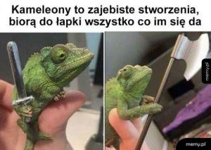 Kameleony