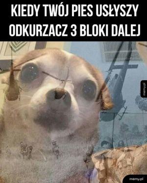 Twój pies