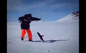 Tajemny atak pingwina