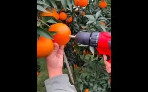 Soczyste pomarańczce