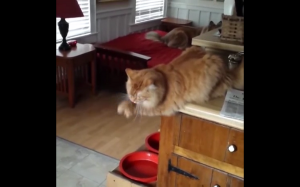 Koteł błaga o żarcie