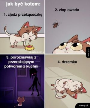 Jak być kotem