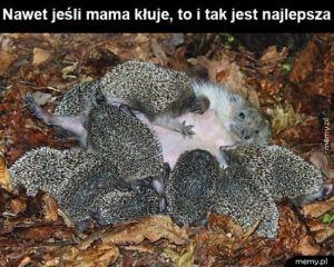 Mama jeż