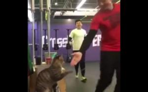 Ten kot przybija piątkę po każdym treningu