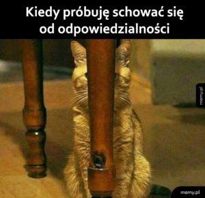 Schowany