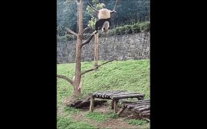 Początki treningu Kung Fu Pandy