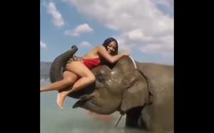 Awww, jaki słodki słonik