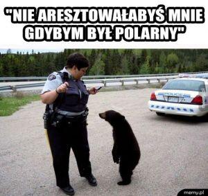 Białe niedźwiedzie mają lepiej