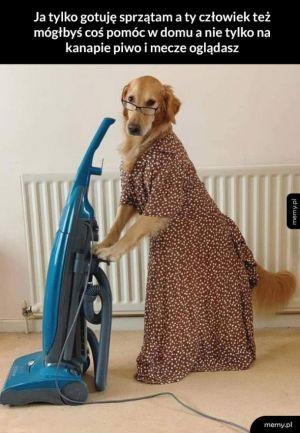 Pies pracujący żadnej pracy się nie boi