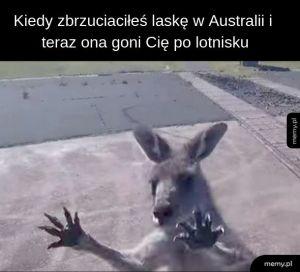Laski z Australii