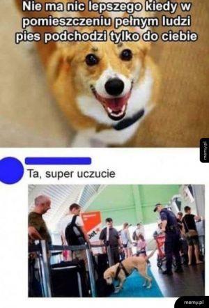 Gdy pies podchodzi do ciebie