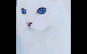 Najbardziej majestatyczne oczy ever