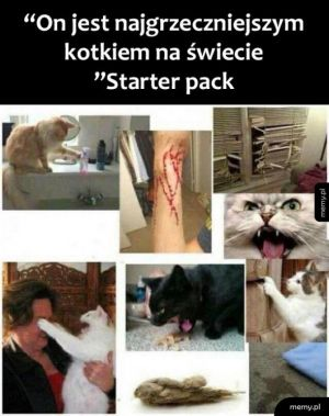 Grzeczny kotek