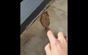 Jakiś dziwny ten liść