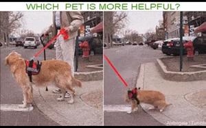 Koty vs psy