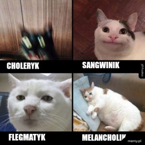 Jakim typem ty jesteś?