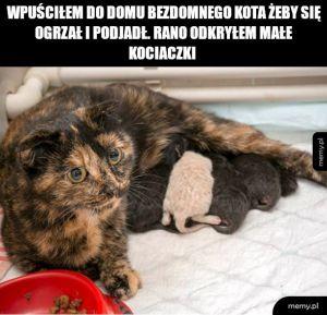 żłobek dla kotów