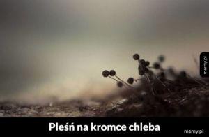 Pleśń